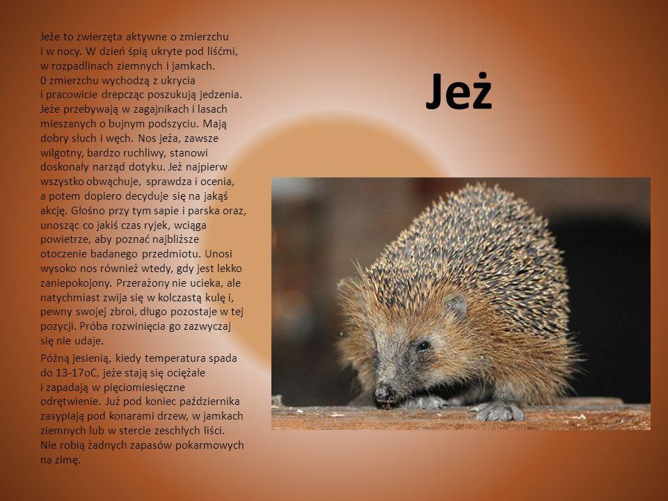 Celem dokarmiania jest zapewnienie dobrej kondycji zwierząt oraz zmniejszenie niekorzystnego oddziaływania żubrów na las. Żubry zaspakajają pragnienie