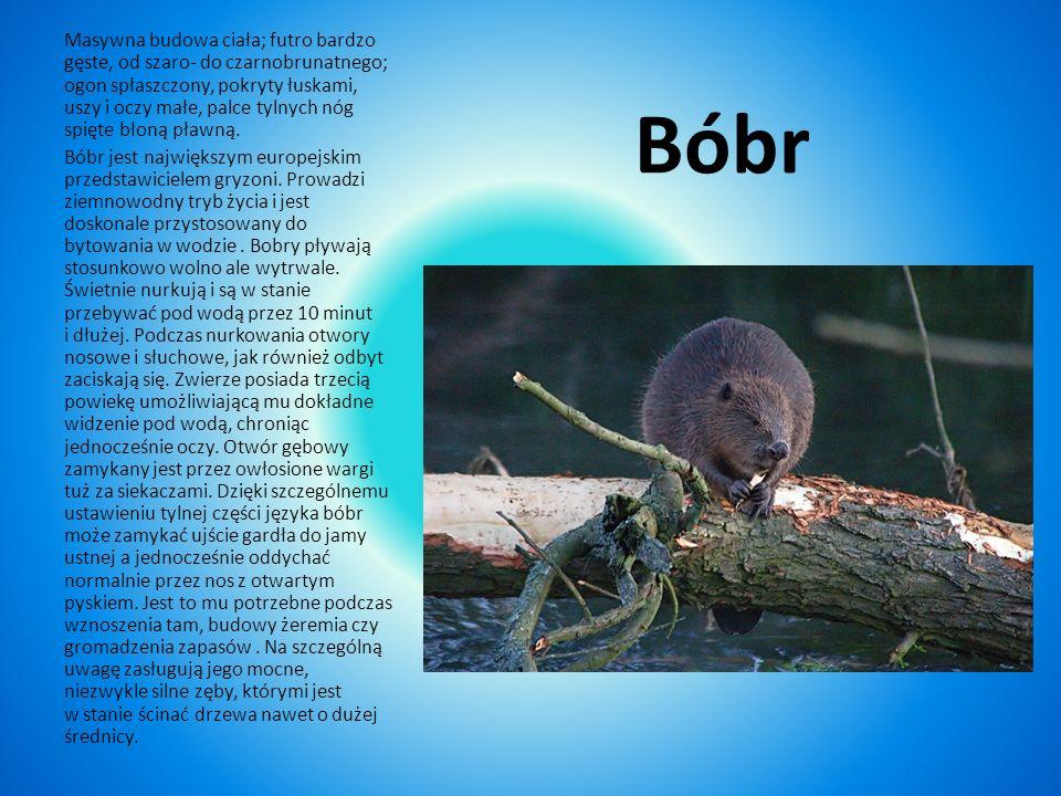 Podstawę pożywienia wydry stanowią: ryby różnych gatunków, żaby i raki. Nie gardzi też większymi żukami wodnymi, pisklętami ptaków wodnych i błotnych,