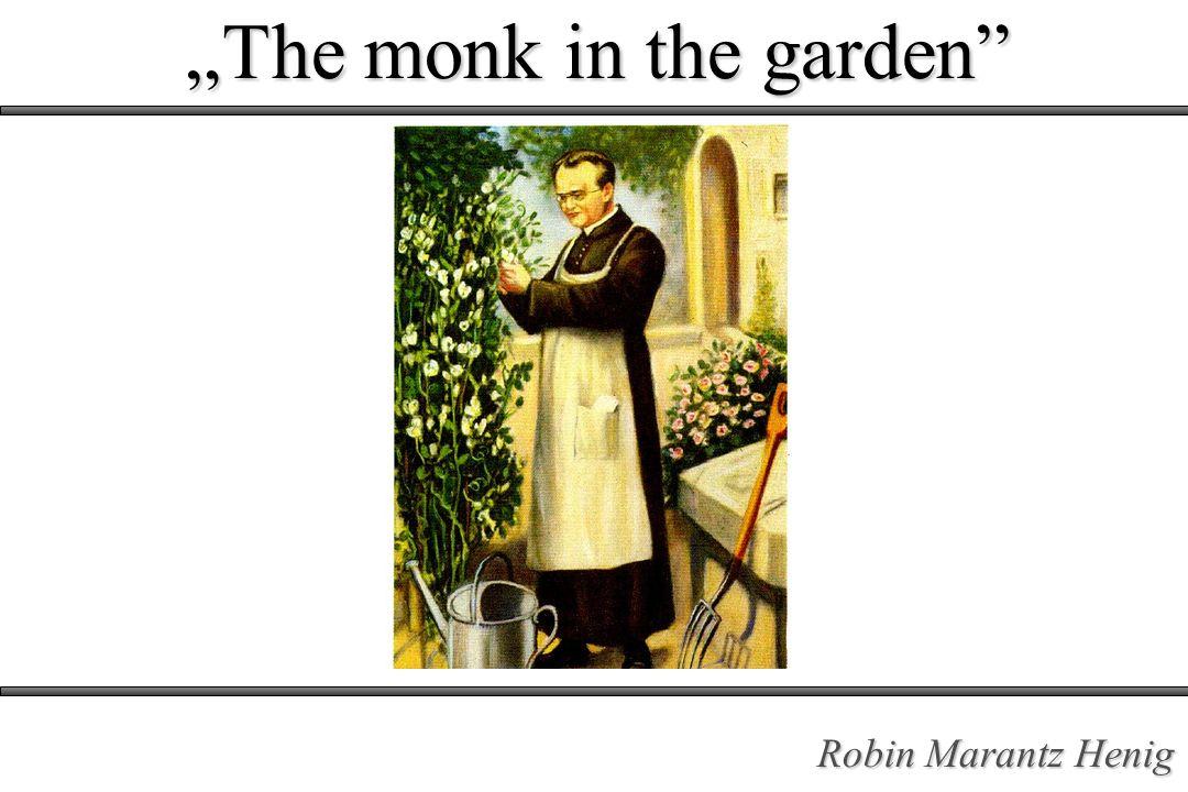 Mnich w ogrodzie