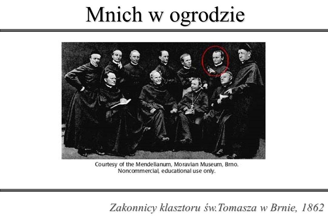 Mnich w ogrodzie Drugie prawo Mendla (prawo niezależnej segregacji)