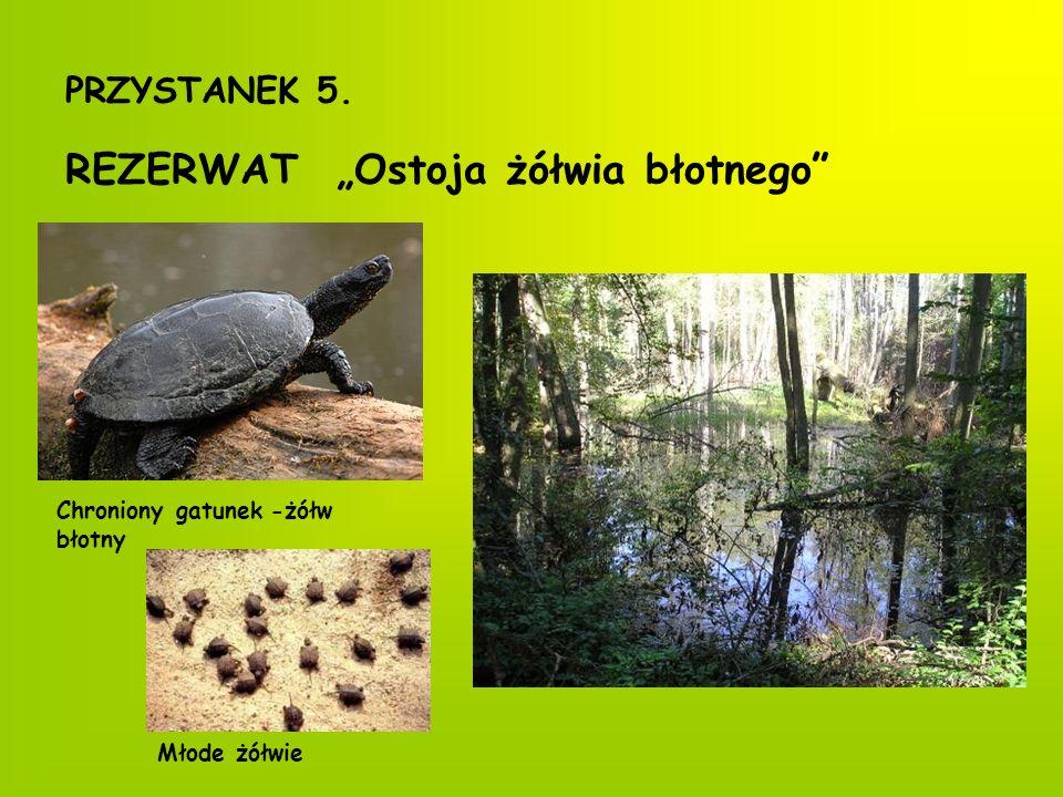 Inni mieszkańcy rezerwatu Zaskroniec zwyczajny Ropucha szara Żaba brunatna Kumak