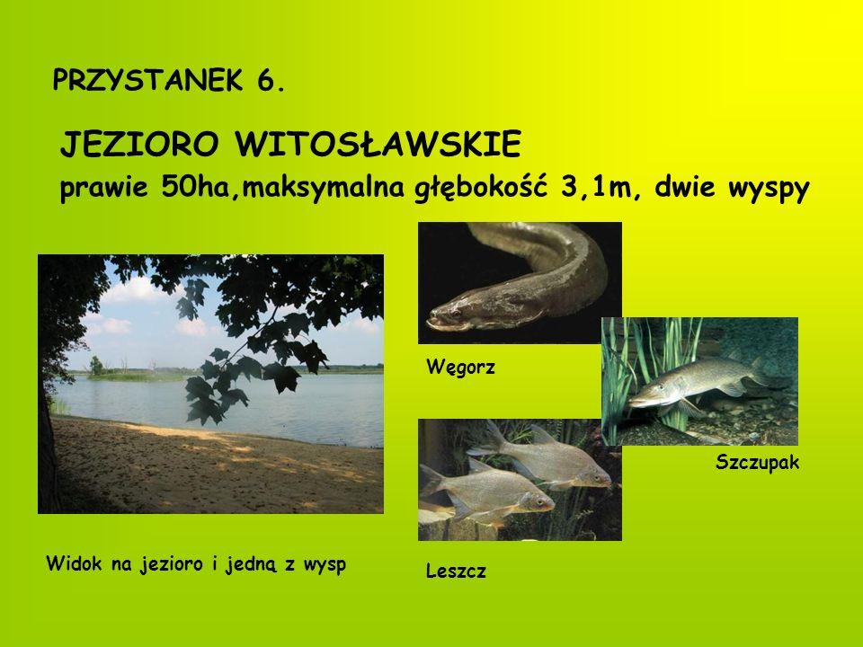 PRZYSTANEK 7. KAPLICZKA-MAUZOLEUM Mauzoleum dawnych właścicieli Witosławia Herb Opitzów