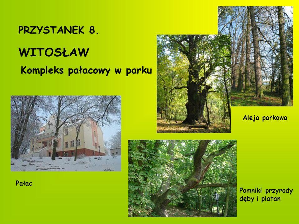 Witosławskie ule Kocimiętka Pierwiosnek IrgaDąbrówka Miodunka Mniszek lekarski