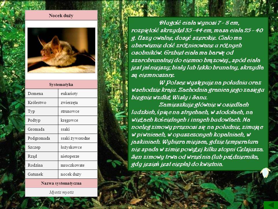 Nocek duży Systematyka Domenaeukarioty Królestwozwierzęta Typstrunowce Podtypkręgowce Gromadassaki Podgromadassaki żyworodne Szczepłożyskowce Rządniet