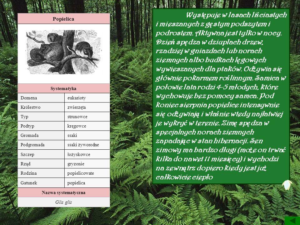 Popielica Systematyka Domenaeukarioty Królestwozwierzęta Typstrunowce Podtypkręgowce Gromadassaki Podgromadassaki żyworodne Szczepłożyskowce Rządgryzo