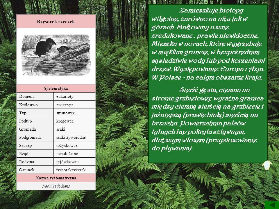 Rzęsorek rzeczek Systematyka Domenaeukarioty Królestwozwierzęta Typstrunowce Podtypkręgowce Gromadassaki Podgromadassaki żyworodne Szczepłożyskowce Rz