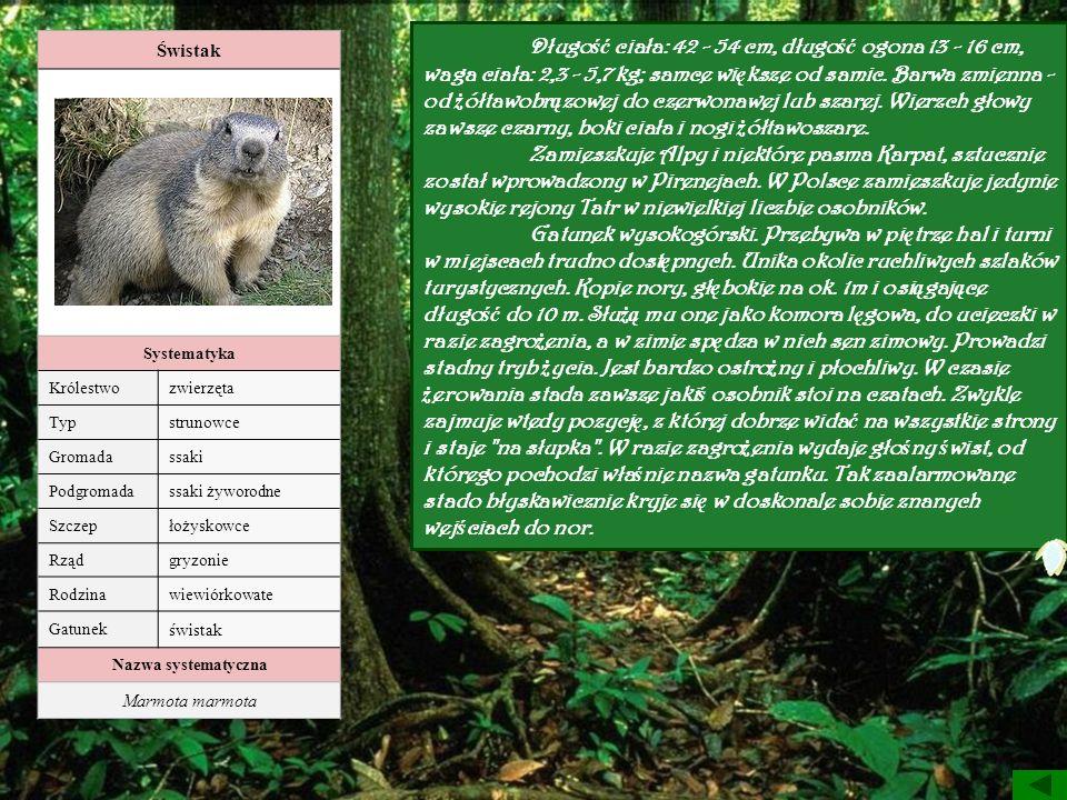 Świstak Systematyka Królestwozwierzęta Typstrunowce Gromadassaki Podgromadassaki żyworodne Szczepłożyskowce Rządgryzonie Rodzinawiewiórkowate Gatunek