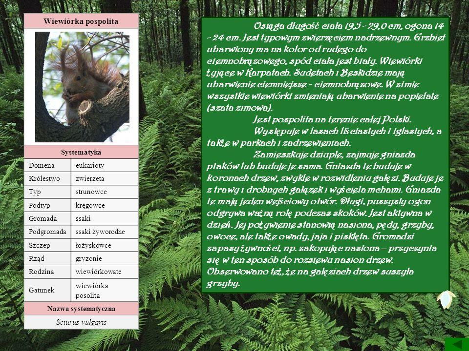 Wiewiórka pospolita Systematyka Domenaeukarioty Królestwozwierzęta Typstrunowce Podtypkręgowce Gromadassaki Podgromadassaki żyworodne Szczepłożyskowce