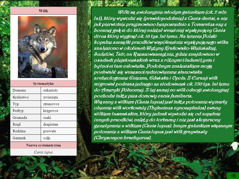 Wilk Systematyka Domenaeukarioty Królestwozwierzęta Typstrunowce Podtypkręgowce Gromadassaki Rząddrapieżne Rodzinapsowate Gatunek wilk Nazwa systematy