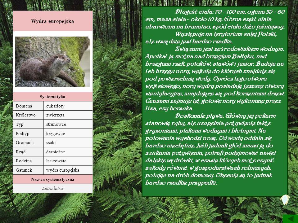 Wydra europejska Systematyka Domenaeukarioty Królestwozwierzęta Typstrunowce Podtypkręgowce Gromadassaki Rząddrapieżne Rodzinałasicowate Gatunekwydra