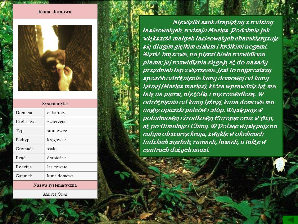 Kuna domowa Systematyka Domenaeukarioty Królestwozwierzęta Typstrunowce Podtypkręgowce Gromadassaki Rząddrapieżne Rodzinałasicowate Gatunekkuna domowa