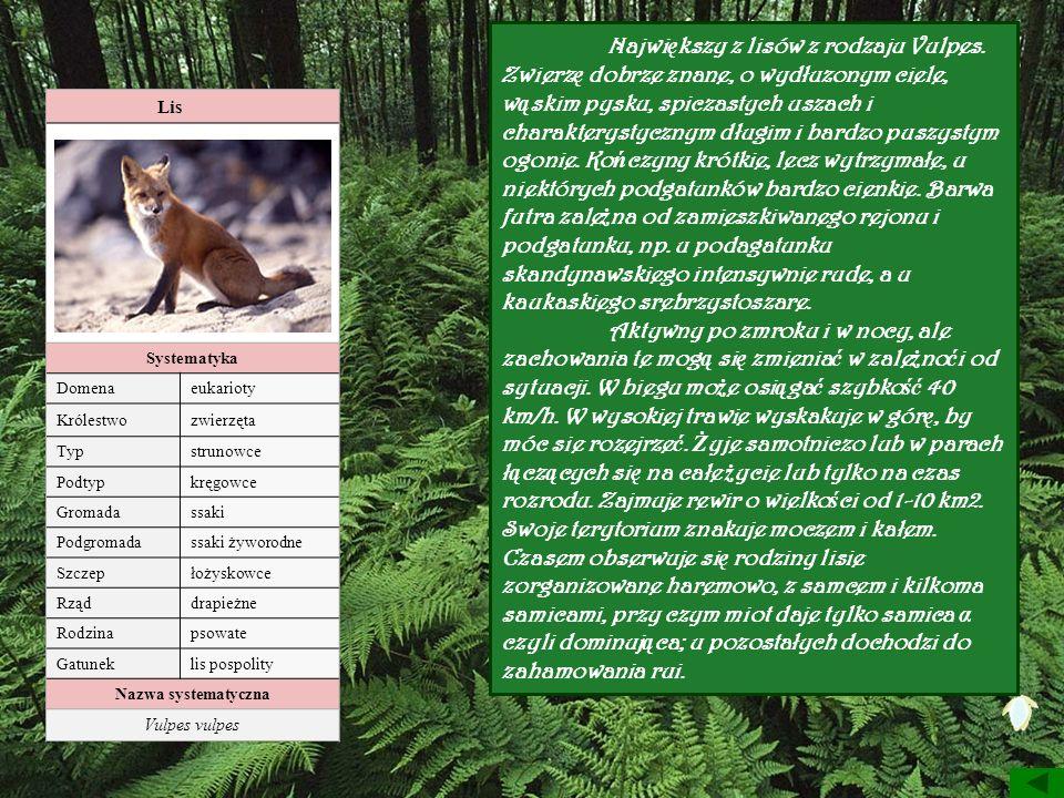 Lis Systematyka Domenaeukarioty Królestwozwierzęta Typstrunowce Podtypkręgowce Gromadassaki Podgromadassaki żyworodne Szczepłożyskowce Rząddrapieżne R