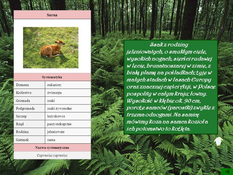 Sarna Systematyka Domenaeukarioty Królestwozwierzęta Gromadassaki Podgromadassaki żyworodne Szczepłożyskowce Rządparzystokopytne Rodzinajeleniowate Ga