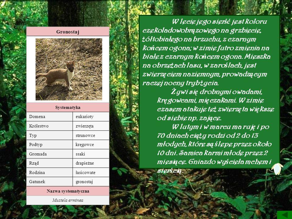 Gronostaj Systematyka Domenaeukarioty Królestwozwierzęta Typstrunowce Podtypkręgowce Gromadassaki Rząddrapieżne Rodzinałasicowate Gatunekgronostaj Naz