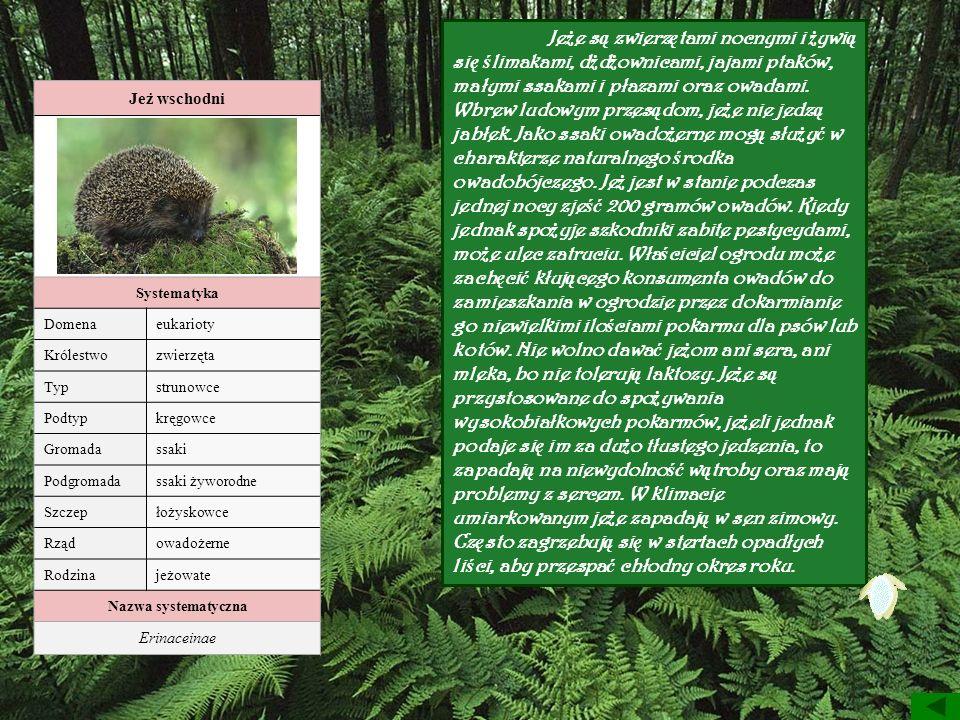 Jeż wschodni Systematyka Domenaeukarioty Królestwozwierzęta Typstrunowce Podtypkręgowce Gromadassaki Podgromadassaki żyworodne Szczepłożyskowce Rządow