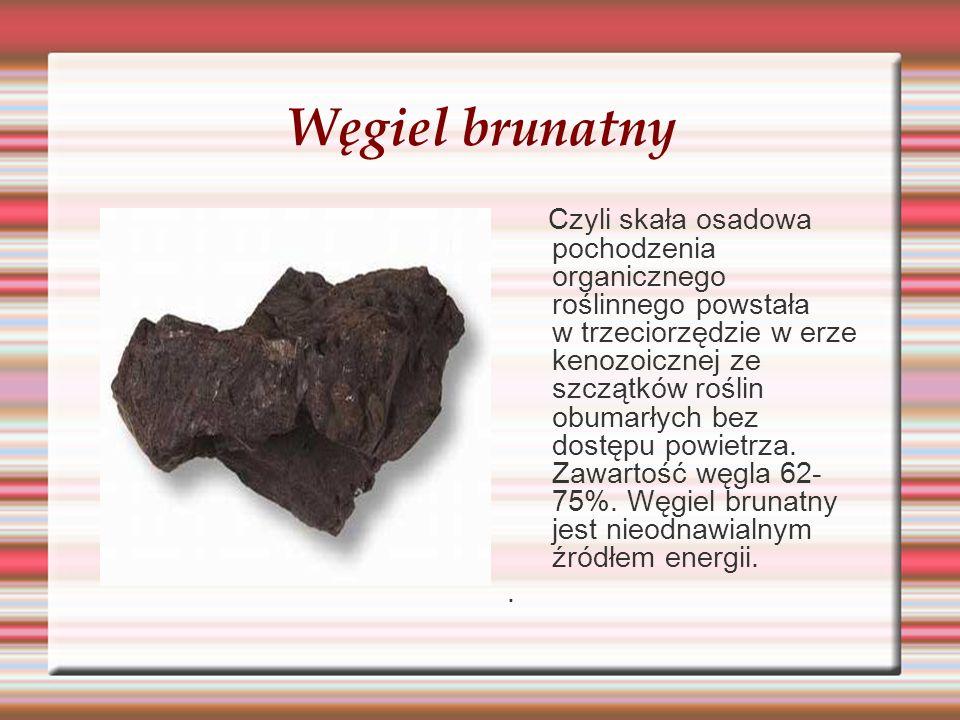 Węgiel brunatny Czyli skała osadowa pochodzenia organicznego roślinnego powstała w trzeciorzędzie w erze kenozoicznej ze szczątków roślin obumarłych b