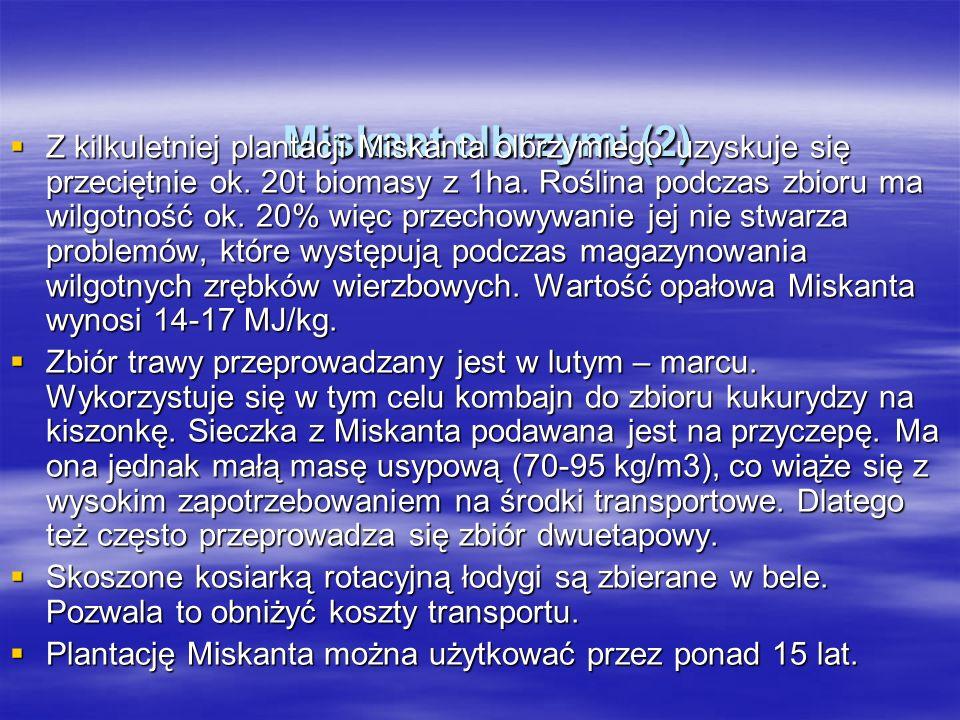 Miskant olbrzymi (2) Miskant olbrzymi (2) Z kilkuletniej plantacji Miskanta olbrzymiego uzyskuje się przeciętnie ok.