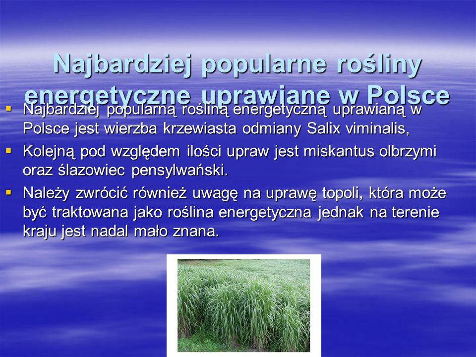 Najbardziej popularne rośliny energetyczne uprawiane w Polsce Najbardziej popularną rośliną energetyczną uprawianą w Polsce jest wierzba krzewiasta odmiany Salix viminalis, Najbardziej popularną rośliną energetyczną uprawianą w Polsce jest wierzba krzewiasta odmiany Salix viminalis, Kolejną pod względem ilości upraw jest miskantus olbrzymi oraz ślazowiec pensylwański.