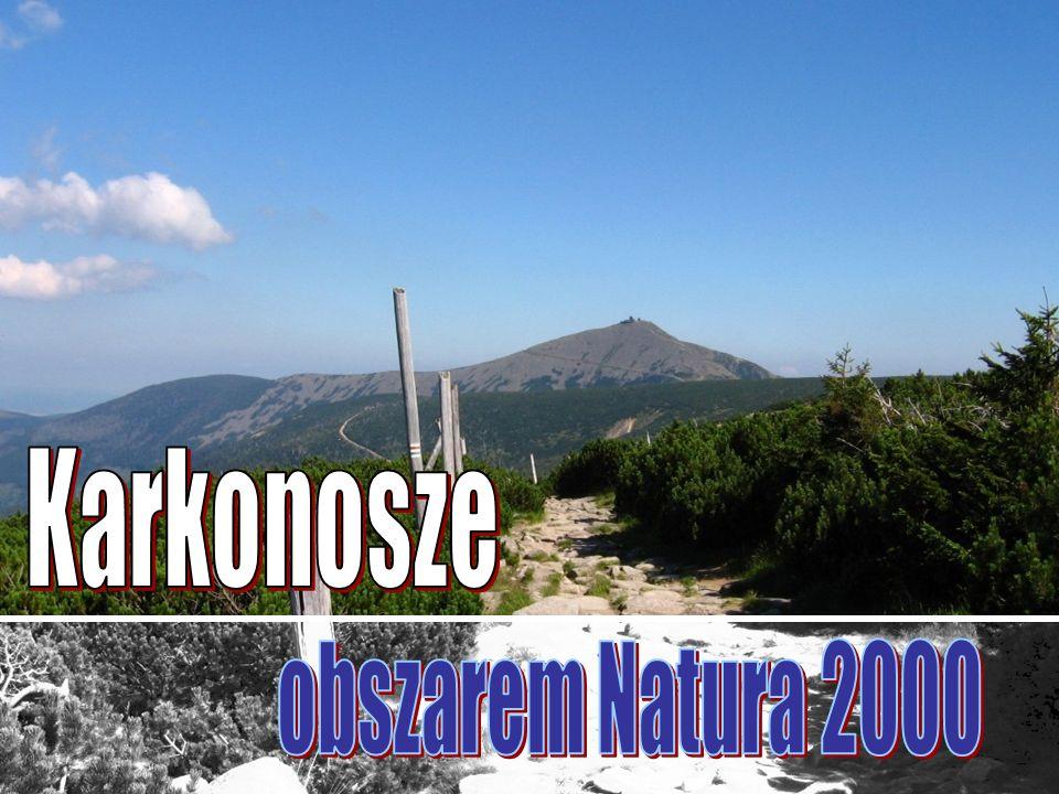 Natura 2000 Obszar Natura 2000 to nowa forma ochrony przyrody (obok takich już istniejących jak park narodowy, rezerwat przyrody, czy inne), wprowadzona do polskiego prawa dotyczącego ochrony przyrody w 2004 r.