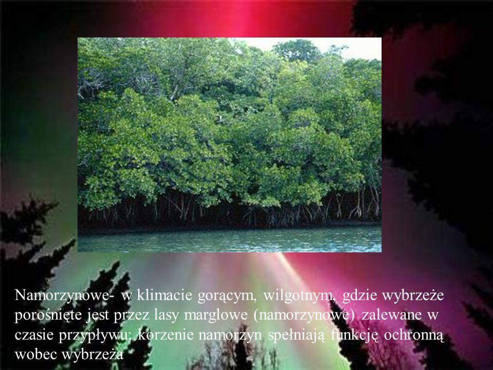 Namorzynowe- w klimacie gorącym, wilgotnym, gdzie wybrzeże porośnięte jest przez lasy marglowe (namorzynowe) zalewane w czasie przypływu; korzenie nam