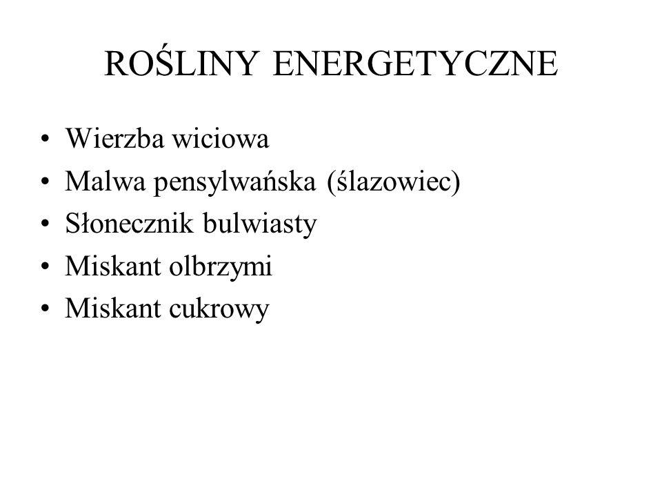 ROŚLINY ENERGETYCZNE Wierzba wiciowa Malwa pensylwańska (ślazowiec) Słonecznik bulwiasty Miskant olbrzymi Miskant cukrowy