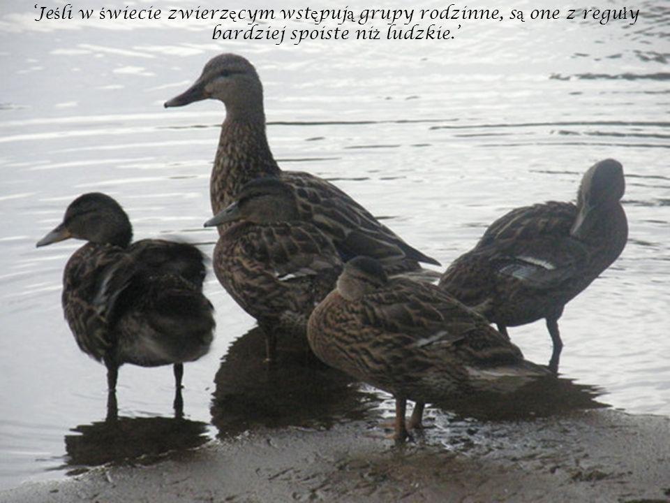 Je ś li w ś wiecie zwierz ę cym wst ę puj ą grupy rodzinne, s ą one z regu ł y bardziej spoiste ni ż ludzkie.