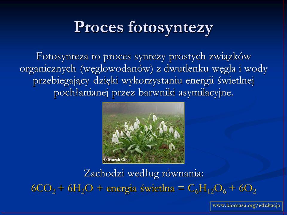 Proces fotosyntezy Fotosynteza to proces syntezy prostych związków organicznych (węglowodanów) z dwutlenku węgla i wody przebiegający dzięki wykorzyst