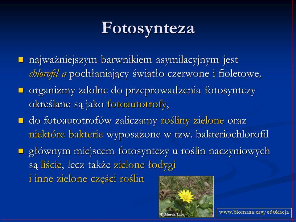 Fotosynteza najważniejszym barwnikiem asymilacyjnym jest chlorofil a pochłaniający światło czerwone i fioletowe, najważniejszym barwnikiem asymilacyjn