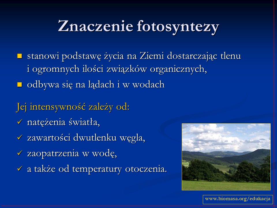 Znaczenie fotosyntezy stanowi podstawę życia na Ziemi dostarczając tlenu i ogromnych ilości związków organicznych, stanowi podstawę życia na Ziemi dos
