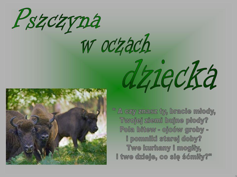 Pszczyna to miasto w województwie śląskim.Znajduje się nad rzeką Pszczynką.