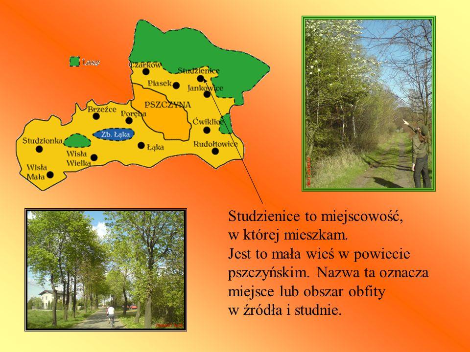 Studzienice to miejscowość, w której mieszkam. Jest to mała wieś w powiecie pszczyńskim. Nazwa ta oznacza miejsce lub obszar obfity w źródła i studnie