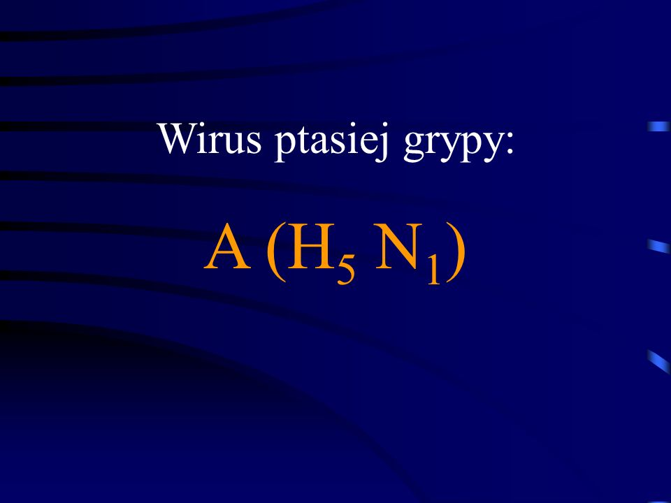 Wirus ptasiej grypy: A (H 5 N 1 )