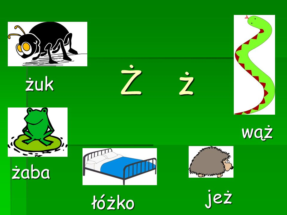ŻżŻżŻżŻż wąż jeż żuk łóżko żaba