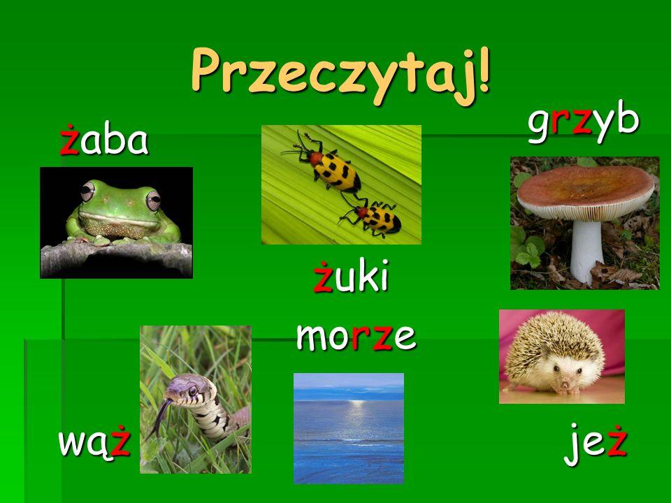 Przeczytaj! żuki żaba jeż wąż grzyb morze
