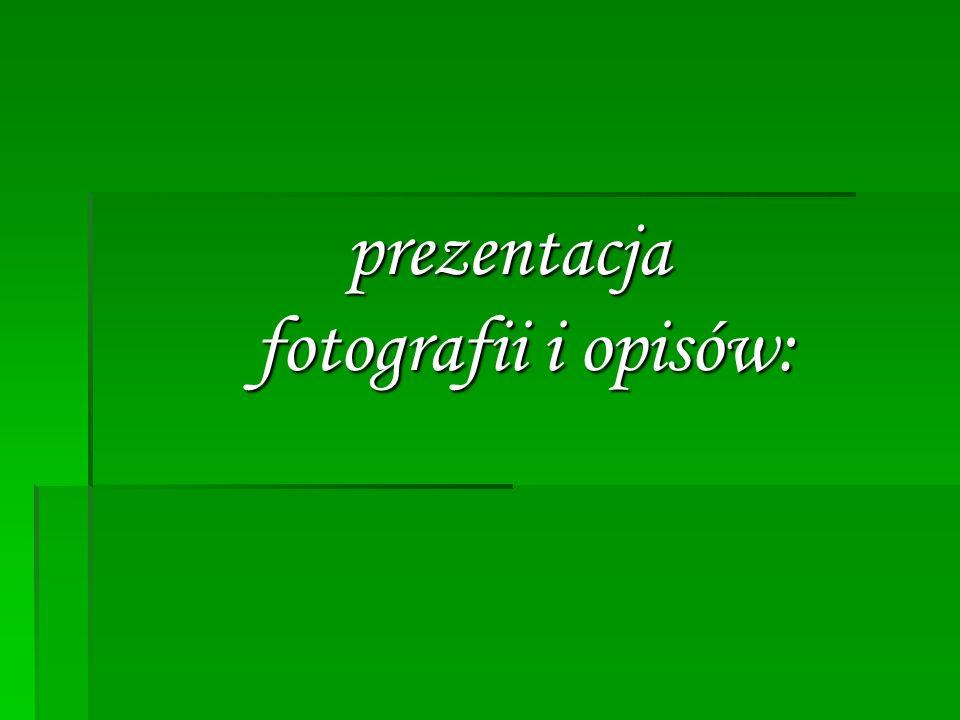 prezentacja fotografii i opisów: