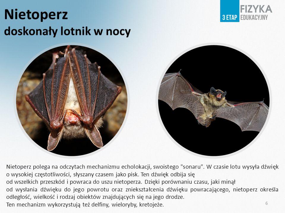 6 Nietoperz doskonały lotnik w nocy Nietoperz polega na odczytach mechanizmu echolokacji, swoistego