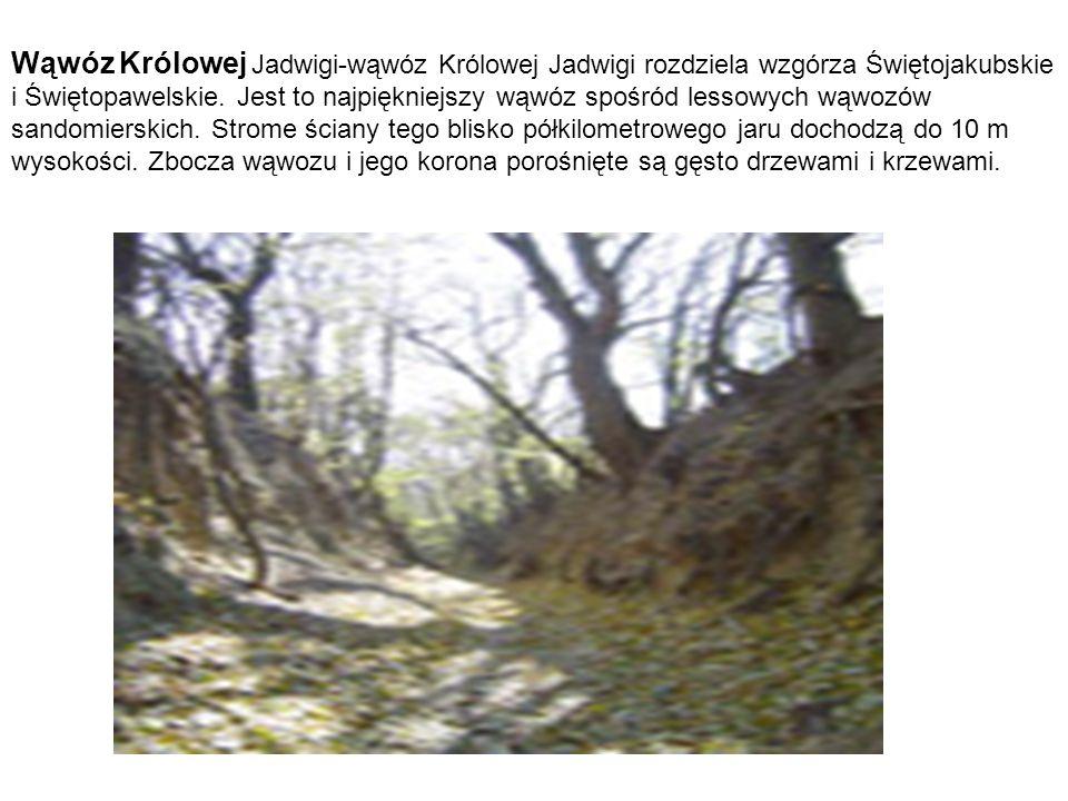 Wąwóz Królowej Jadwigi-wąwóz Królowej Jadwigi rozdziela wzgórza Świętojakubskie i Świętopawelskie. Jest to najpiękniejszy wąwóz spośród lessowych wąwo
