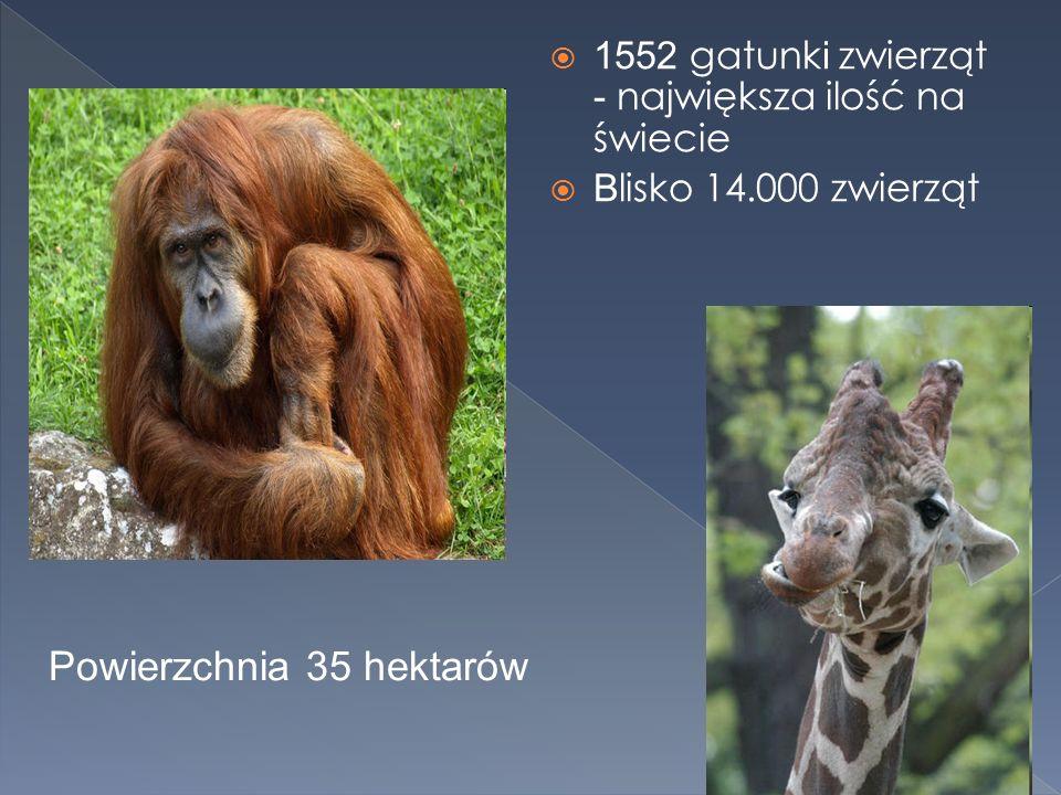 1552 gatunk i zwierząt - największa ilość na świecie B lisko 14.000 zwierząt Powierzchnia 35 hektarów
