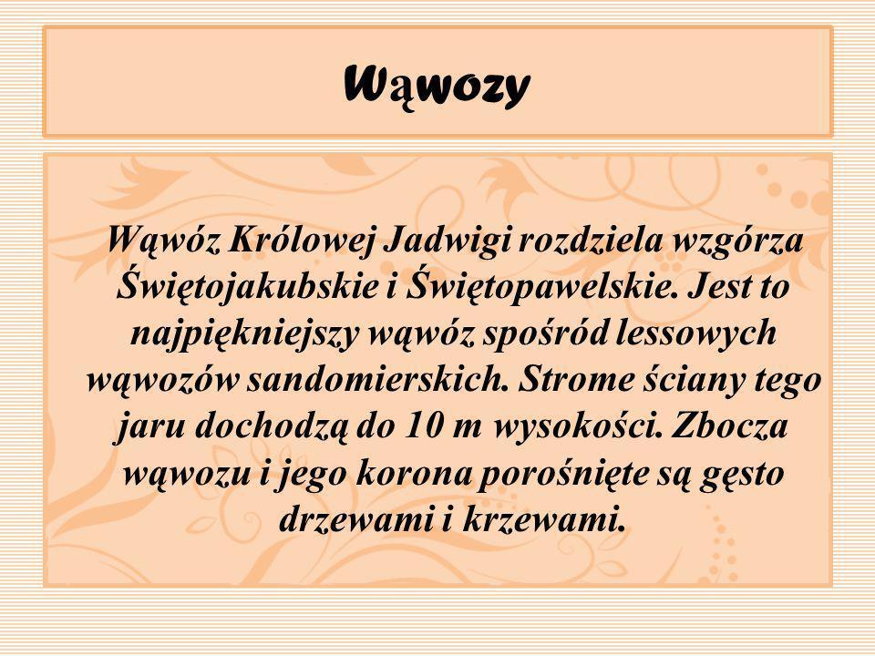 W ą wozy Wąwóz Królowej Jadwigi rozdziela wzgórza Świętojakubskie i Świętopawelskie. Jest to najpiękniejszy wąwóz spośród lessowych wąwozów sandomiers