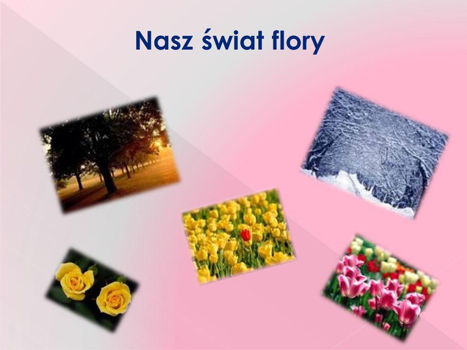 Nasz świat flory