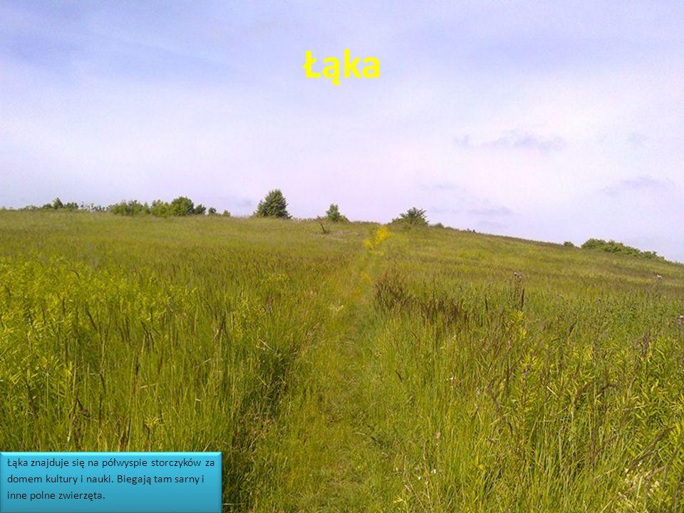 Łąka Łąka znajduje się na półwyspie storczyków za domem kultury i nauki. Biegają tam sarny i inne polne zwierzęta. Łąka znajduje się na półwyspie stor