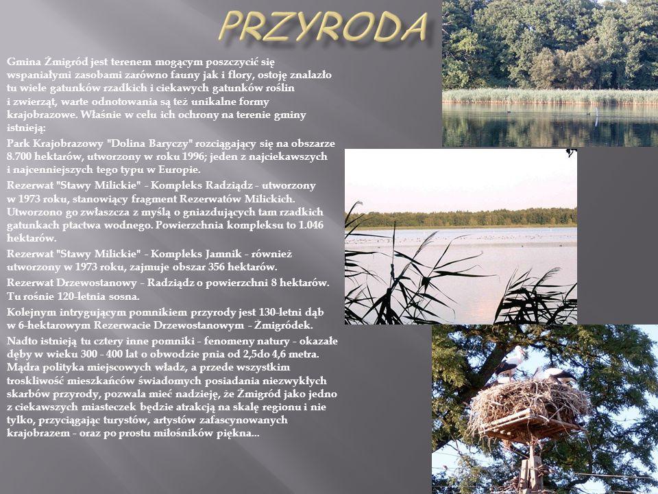 Gmina Żmigród jest terenem mogącym poszczycić się wspaniałymi zasobami zarówno fauny jak i flory, ostoję znalazło tu wiele gatunków rzadkich i ciekawy