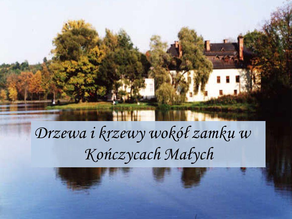 Badania terenowe Badania dendroflory na terenie Parku Dworskiego wokół zamku w Kończycach Małych były prowadzone od października 2011 roku do stycznia 2012 roku.