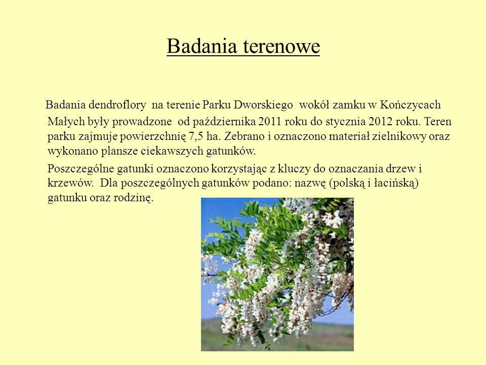 Badania terenowe Badania dendroflory na terenie Parku Dworskiego wokół zamku w Kończycach Małych były prowadzone od października 2011 roku do stycznia
