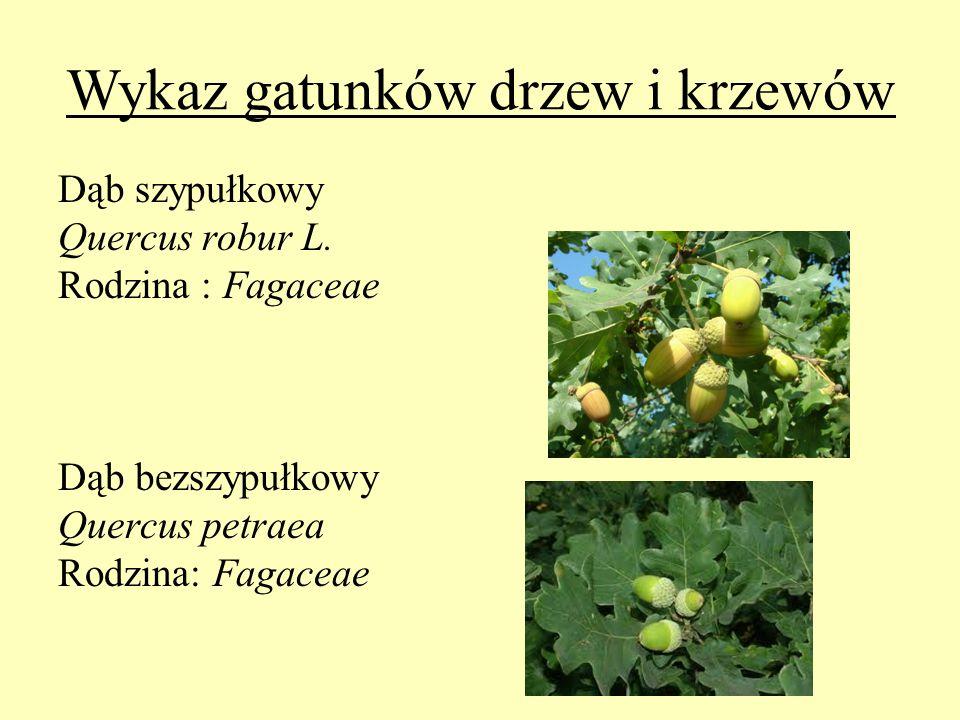 Wykaz gatunków drzew i krzewów Dąb szypułkowy Quercus robur L. Rodzina : Fagaceae Dąb bezszypułkowy Quercus petraea Rodzina: Fagaceae