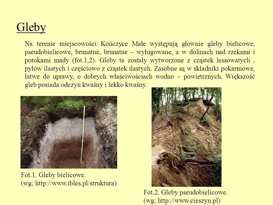 Gleby Na terenie miejscowości Kończyce Małe występują głownie gleby bielicowe, pseudobielicowe, brunatne, brunatne – wyługowane, a w dolinach nad rzek