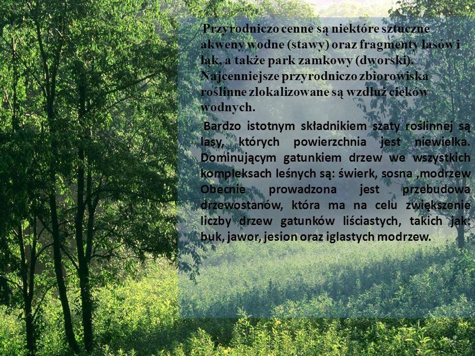 Przyrodniczo cenne są niektóre sztuczne akweny wodne (stawy) oraz fragmenty lasów i łąk, a także park zamkowy (dworski). Najcenniejsze przyrodniczo zb