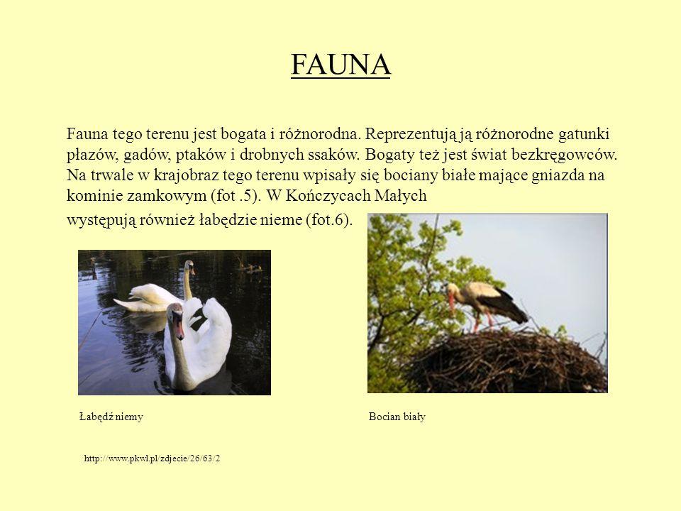 FAUNA Fauna tego terenu jest bogata i różnorodna. Reprezentują ją różnorodne gatunki płazów, gadów, ptaków i drobnych ssaków. Bogaty też jest świat be