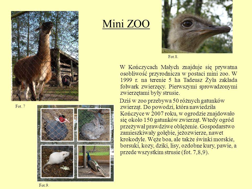 Mini ZOO W Kończycach Małych znajduje się prywatna osobliwość przyrodnicza w postaci mini zoo. W 1999 r. na terenie 5 ha Tadeusz Żyła zakłada folwark