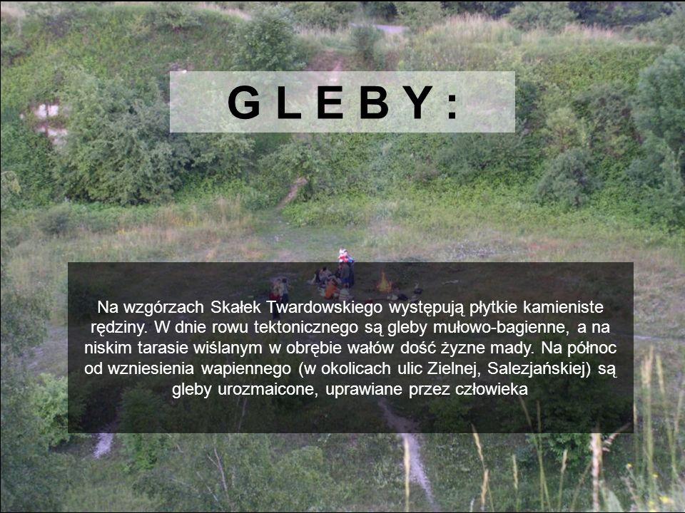 G L E B Y : Na wzgórzach Skałek Twardowskiego występują płytkie kamieniste rędziny. W dnie rowu tektonicznego są gleby mułowo-bagienne, a na niskim ta